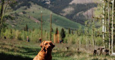 colorado emotional support dog