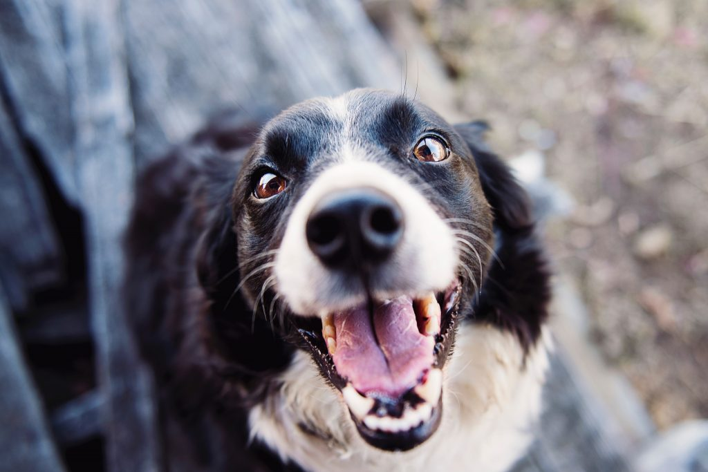 Emotional Support Animal Laws In Illinois 2020 Emotionalsupport Pet
