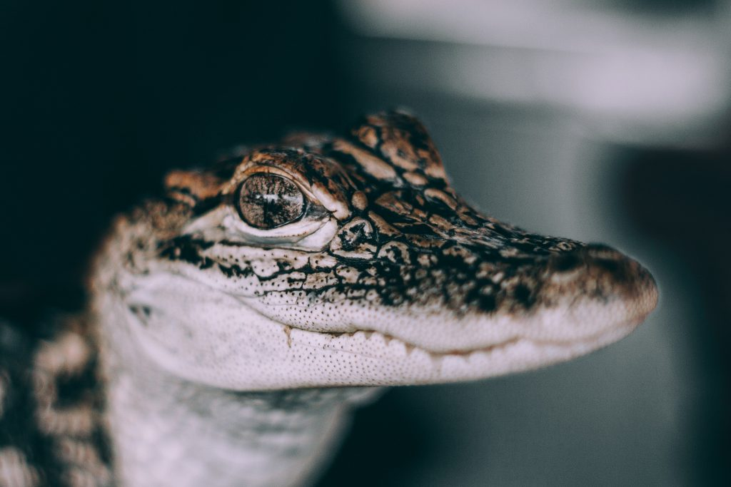 Alligators can not help you with mental health disroders and emotional support.
