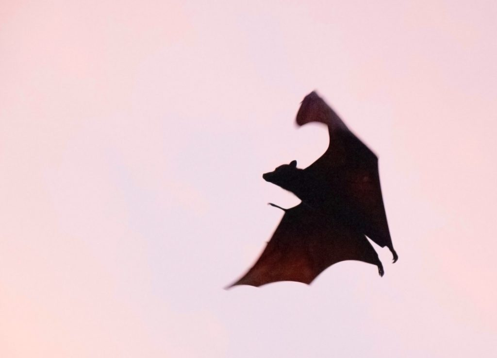 Bats can not be an emotional support animal by the Federal Laws protections